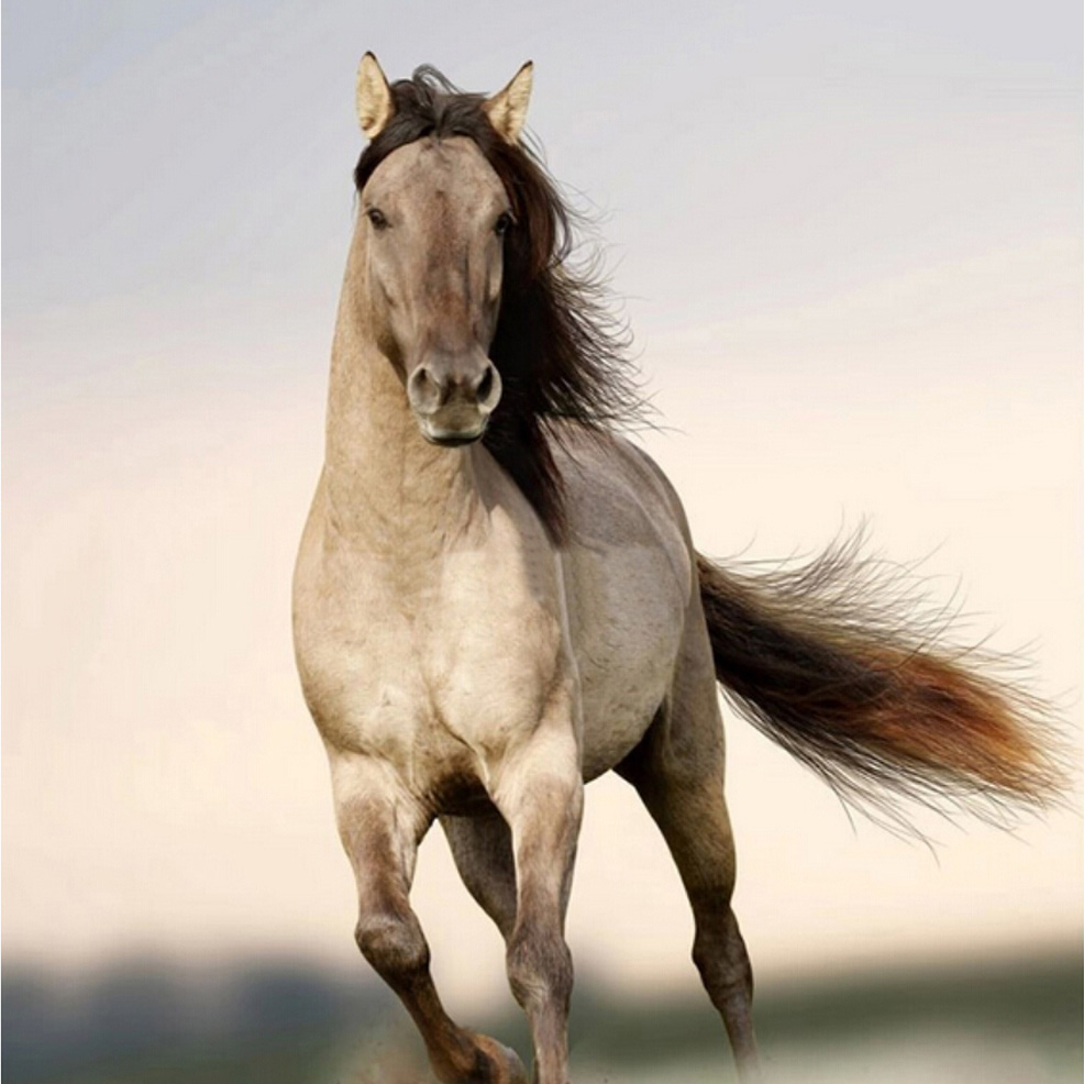 Wonderful Wallpaper Horse Wall - Personalizado-Grande-Mural-papel-de-Parede-3D-De-Animais-Papel-De-Parede-Sala-Quarto-Sofa-TV  Image_615691.jpg