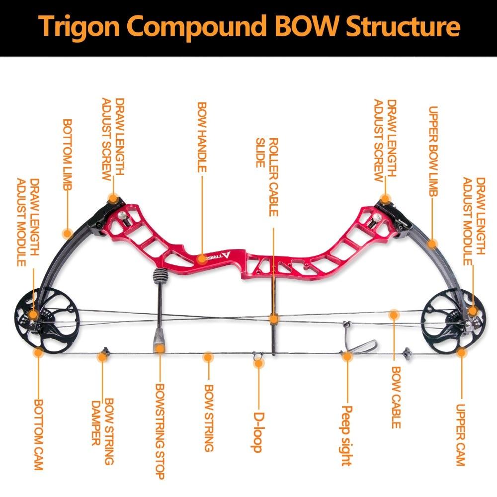Trigon-Compound-BOW-Structure