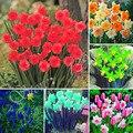 Chegada nova 100 pcs Flor Narciso Narciso Narciso Tazetta Sementes de Flores Sementes de Absorção de Radiação para Quartos Frete Grátis