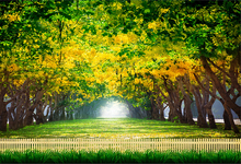 Laeacco Spring Forest Trees Grassland Scenic Photography Backgrounds Customized Photographic Backdrops For Photo Studio
