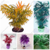 Balcony Terrace Bonsai Palm Tree Seed Exotic Heirloom Flower Seed Leaves of Plants, Multi Color Tree Seed A Bag 10 Pcs Hot SALE