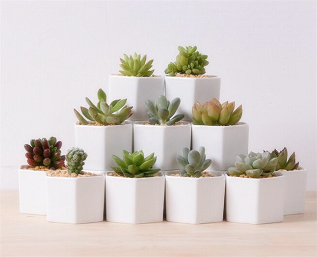 Compare Prices On Glazed Flower Pots Online Shopping Buy