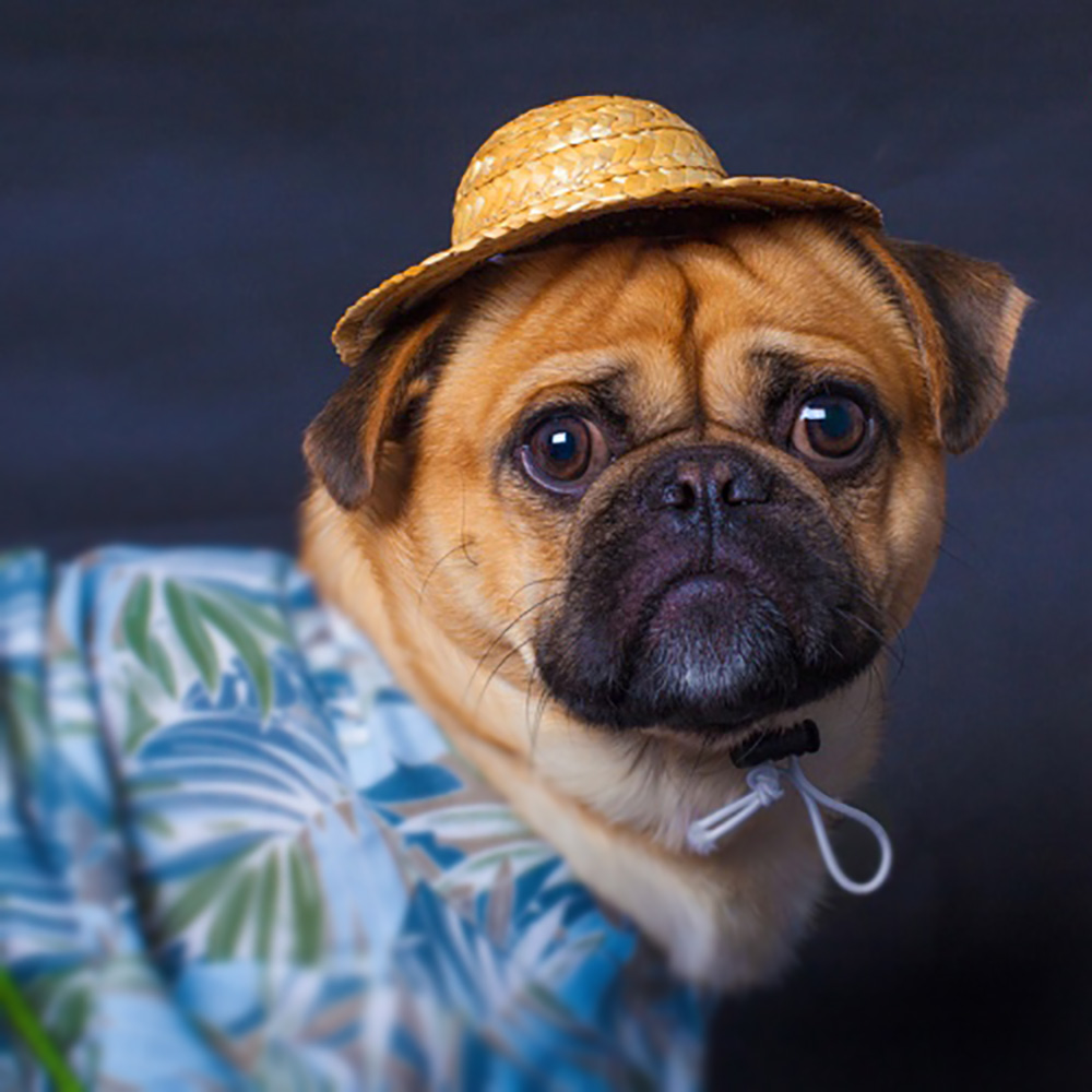e0b812af23b Buy hats for dogs french bulldogs and get free shipping on AliExpress.com