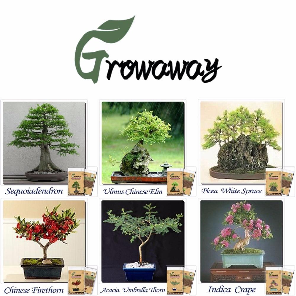 Semillas 15 tipos de diferentes combinaciones de bonsai for Plantas de plastico para decoracion
