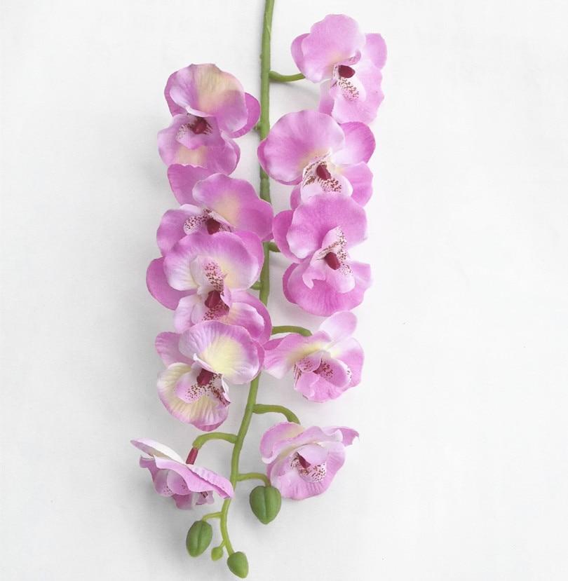 Orhideja Phalaenopsis 10 krema za glavo / oranžna / vroče roza / - Prazniki in zabave - Fotografija 3