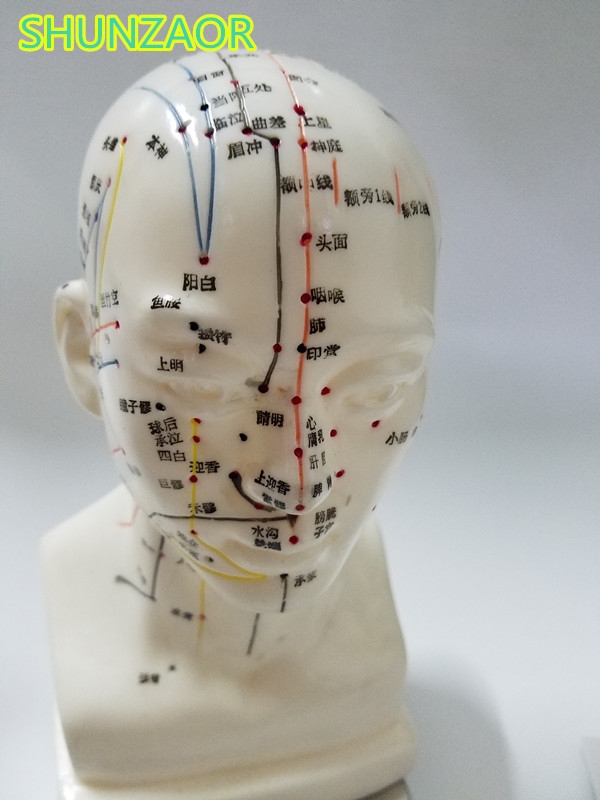 Meridian model human acupuncture point human head acupuncture points model 20cm Medical Education Appliances male 22cm head acupuncture point model head acupuncture four function model acupuncture model