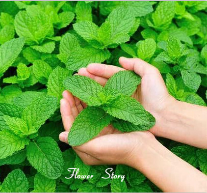 Think, asian herb cancer