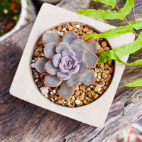 V006 Round And Square Concrete Planter Silicone Mold Clay Craft Home Office Decoration Potting Succulents Cement