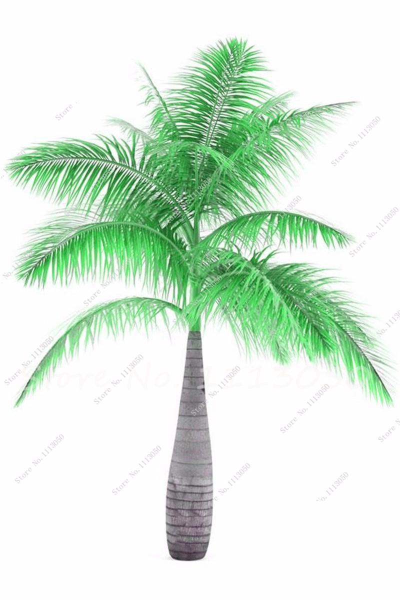 palm11