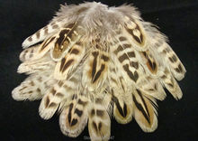 Wholesale!200PCS/LOT! 2-4inch RINGNECK HEN PHEASANT BODY FEATHERS PLUMAGE freeshipping