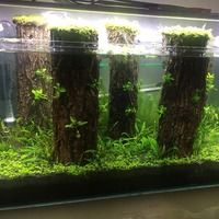 Rainforest Champagne bark Aquarium reptile Feed landscap wooden fish tank Rhododendron tree shaped Moss tree natural driftwood