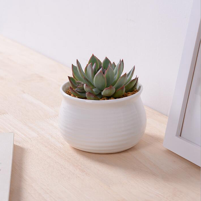 Small White Plant Pots Part - 46: Aliexpress.com : Buy Hot Sale White Glazed Ceramic Flower Pots Small Round  Decorative Planter For Succulents Novelty Home From Reliable Pot Coffee  Suppliers ...