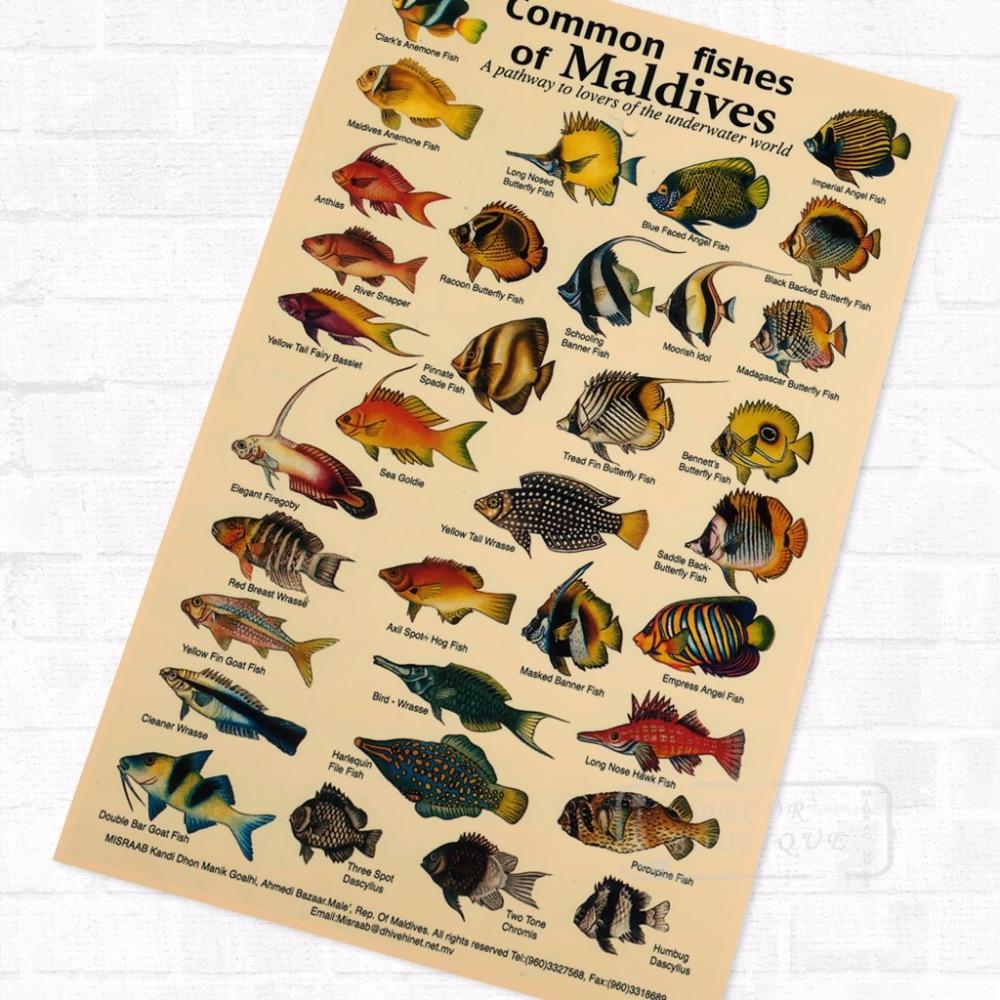Maldives Fishes Marine Organism Illustration Vintage Retro Kraft ...