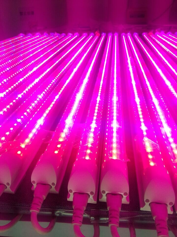4FT 1200mm T8 Integrated Full Spectrum 24W Led Grow Light Tube Red5:Blue1/Red9:Blue1 Plant Growth Lamp 50w 25 led red