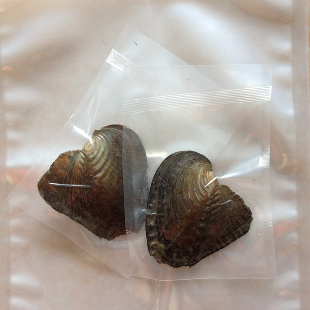 Freshwater Vacuum Pack Oyster 7 8mm Twins Wish Pearls,Best For Promotion,