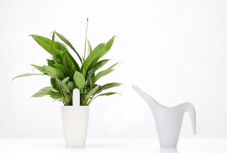 International version xiaomi mi flora monitora czujnik światła inteligentny tester cyfrowy kwiat trawy opieki gleby wody dla roślin ogrodowych 7