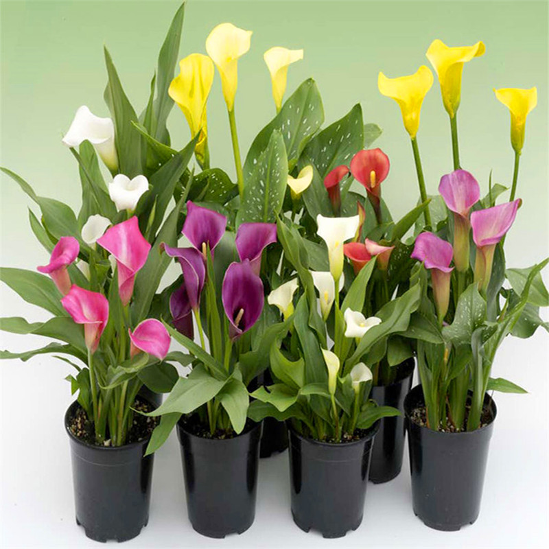 Online get cheap indoor plant pots for Flowering plants for indoors