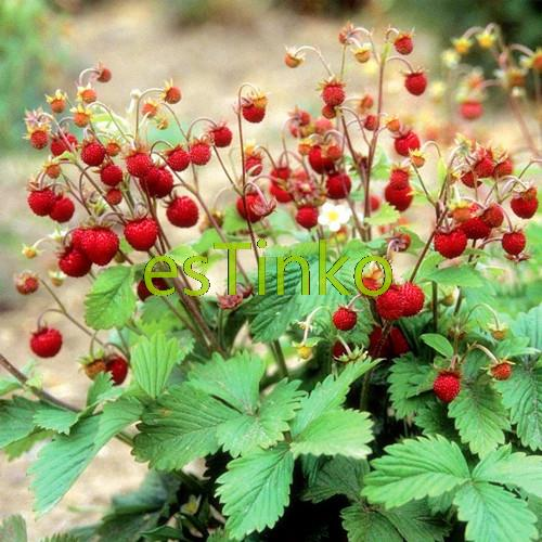 how to make strawberry seed oil