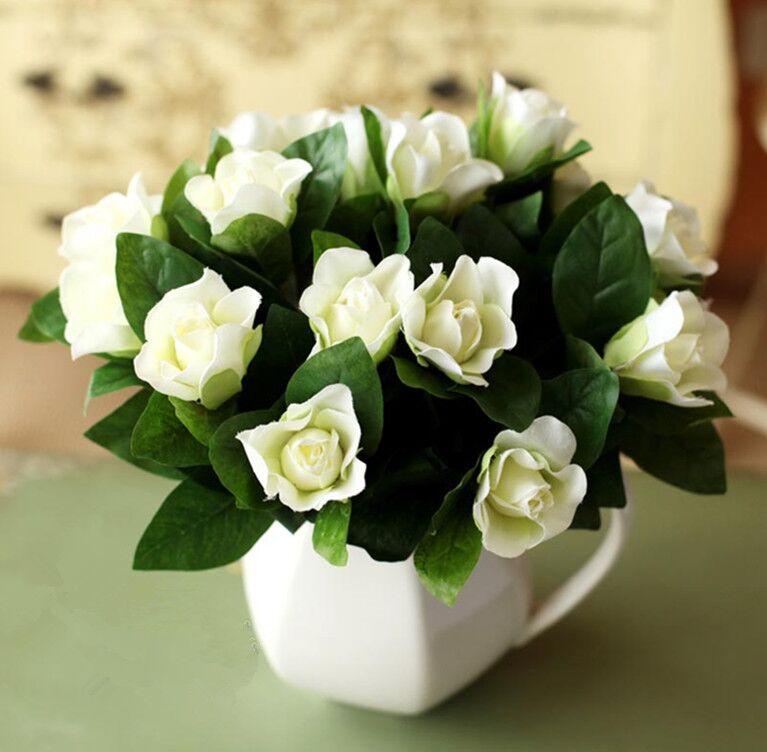 Aliexpress.com : Buy Gardenia Jasminoides White Cape Jasmine Fragrant Flower  Seeds, Original Pack, 20 Seeds / Pack, Bonsai Indoor Danh Danh From  Reliable D ...