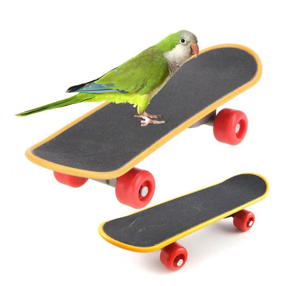 Parrot Intelligence Toys Mini Training Skateboard For Budgies Parakeet Growth Funny Toy Grinding Claw Mini Skateboard