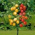 100 apple tree семена Карлик бонсай apple дерево МИНИ-фрукты семена для дома сад посадки отправить большой клубника семена подарок
