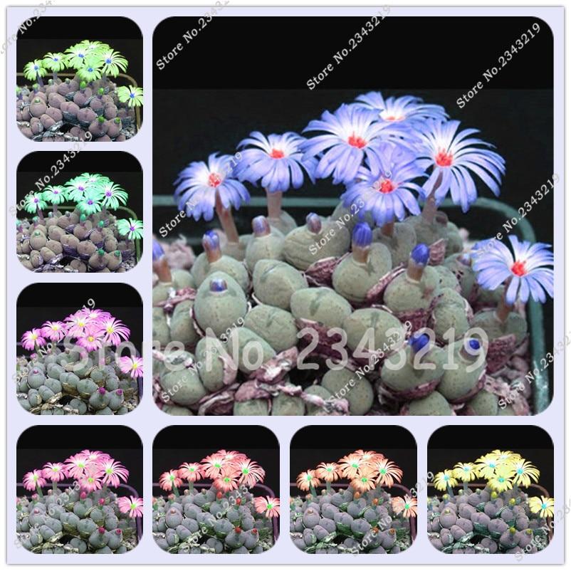 200/bag Mix Succulent seeds lotus Lithops Pseudotruncatella Bonsai plants Seeds for home & garden Flower pots planters Cheap