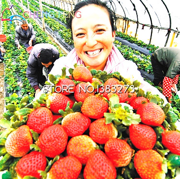 300/bag Giant Strawberry plants Rare Big Diy plant bonsai Fragaria Fruit bonsai For Home Garden flower Plants Cherry Berry semen 5