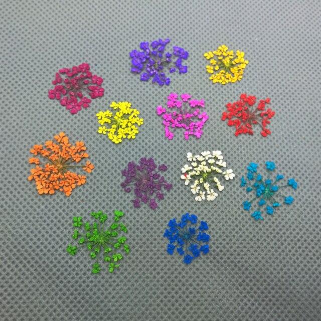 2-2.5cm couleur dentelle fleur naturel fleurs séchées bricolage pressé herbier fleur artisanat décoratif verre globe remplissage résultats