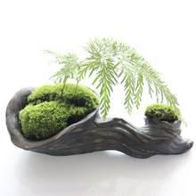 Novo musgo terrário ao vivo, decoração diy puro natural musgo bonsai floresta pavimentar cilindro acessórios de jardim