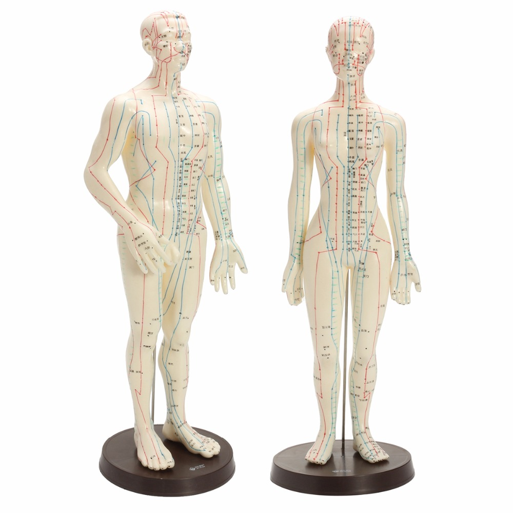 Best buy ) }}Human Body Acupuncture Model Male Female Meridians Model Chart Book Base 48/50cm