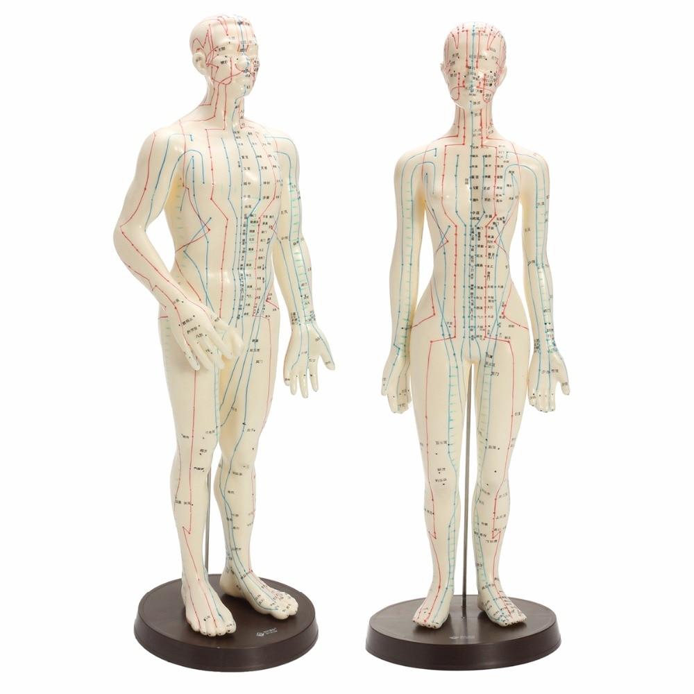 Groß Menschliche Körper Weibliche Diagramm Zeitgenössisch ...