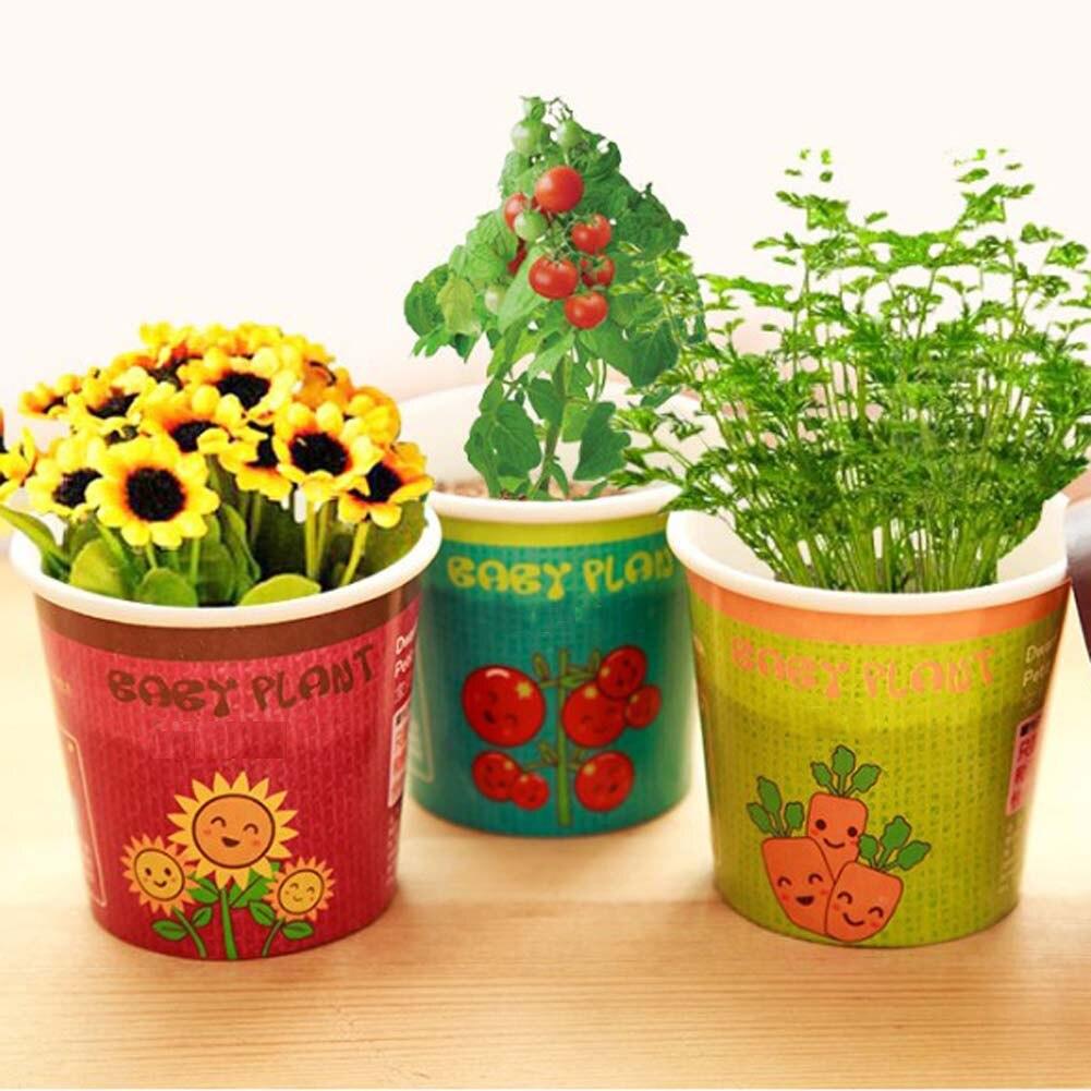 unids mini creativa maceta plantas de girasol y semillas de plantas vegetales de tomate chile