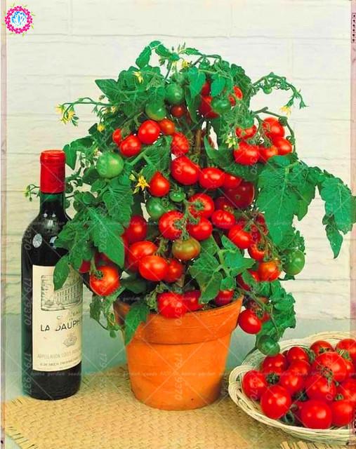 200 pcs/bag bonsai tomato , delicious cherry tomato ,Non-GMO  vegetables Edible food balcony potted garden plants