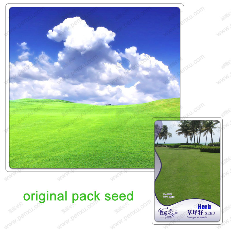 360 Seeds / Pack,Grass lawn seed, perennial grass seed original packaging,high survival rate of natural plant