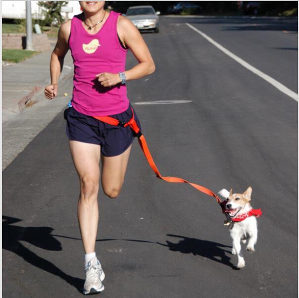 Running Dog Pet products Acarreo cable Cables Collares correa de perro correa de