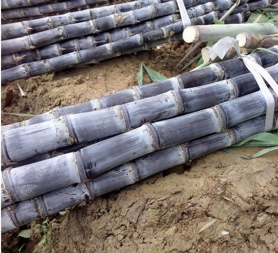 US $5 48 |100 pcs/bag Vegetable and fruits seeds Sugar cane seeds Are rich  in sugar sugarcane seed Bonsai plants Seeds for home & garden-in Bonsai