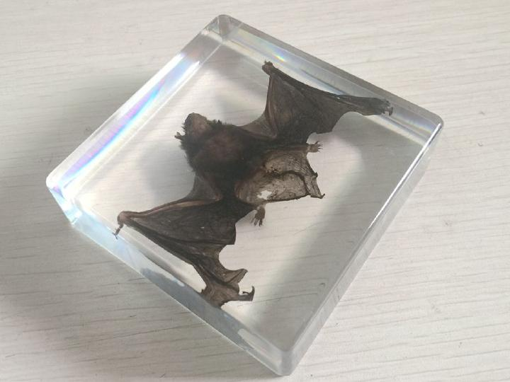 FREE SHIPPING Chinese Pipistrelle Bat Animal Specimen In Clear Acrylic Lucite Paperweight  JEWELRY TAXIDERMY GIFT