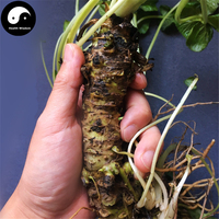 Buy Japanese Wasabia Seeds 100pcs Plant Vegetables Mustard Grow Herbs Vegetable Eutrema Yunnanense