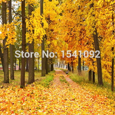 10x10ft Customize free shipping Thin vinyl cloth photography backdrop scenery computer Printing background for photo studio f177
