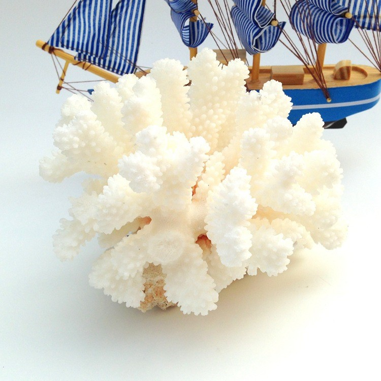 White sea coral tree7