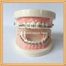 Модель зубов для стоматологии/модель ортодонтических зубов/модель зубов для взрослых/модель зубов для стоматолога
