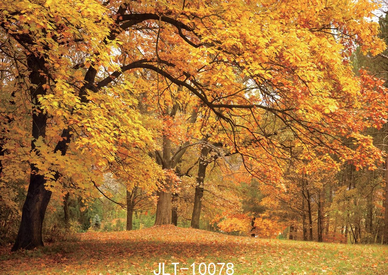 Sommer-Waldphotographie-Hintergrund-Foto-photographischer - Kamera und Foto - Foto 1