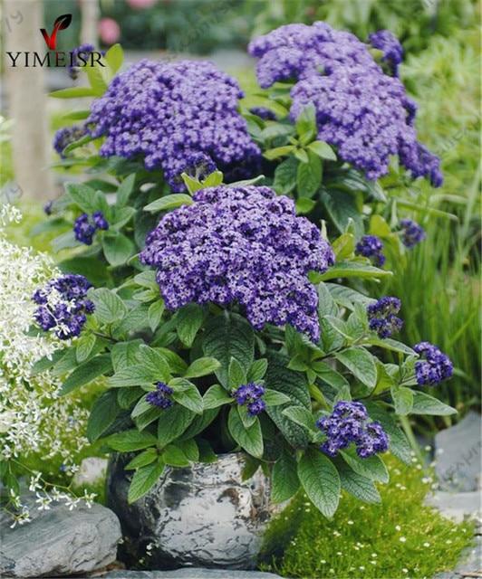 Image result for fleur parfumée