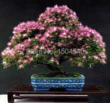 25 Albizia Julibrissin Tree Seeds Mini potted bonsai,DIY home garden,big promotion
