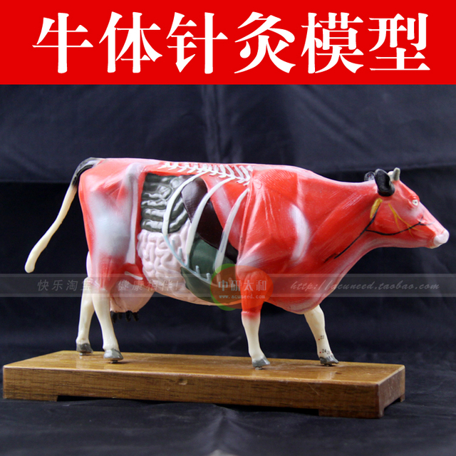 Animal Model Acupuncture Point Model Cow Anatomy Models Cow Anatomy
