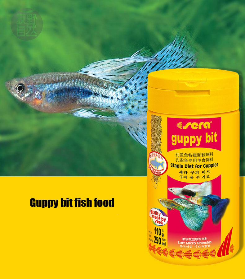 Guppy fish small tropical fish food granules slowly for How to feed fish