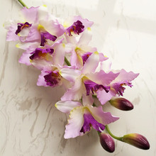 Flowers Cymbidium Wedding Hybrida