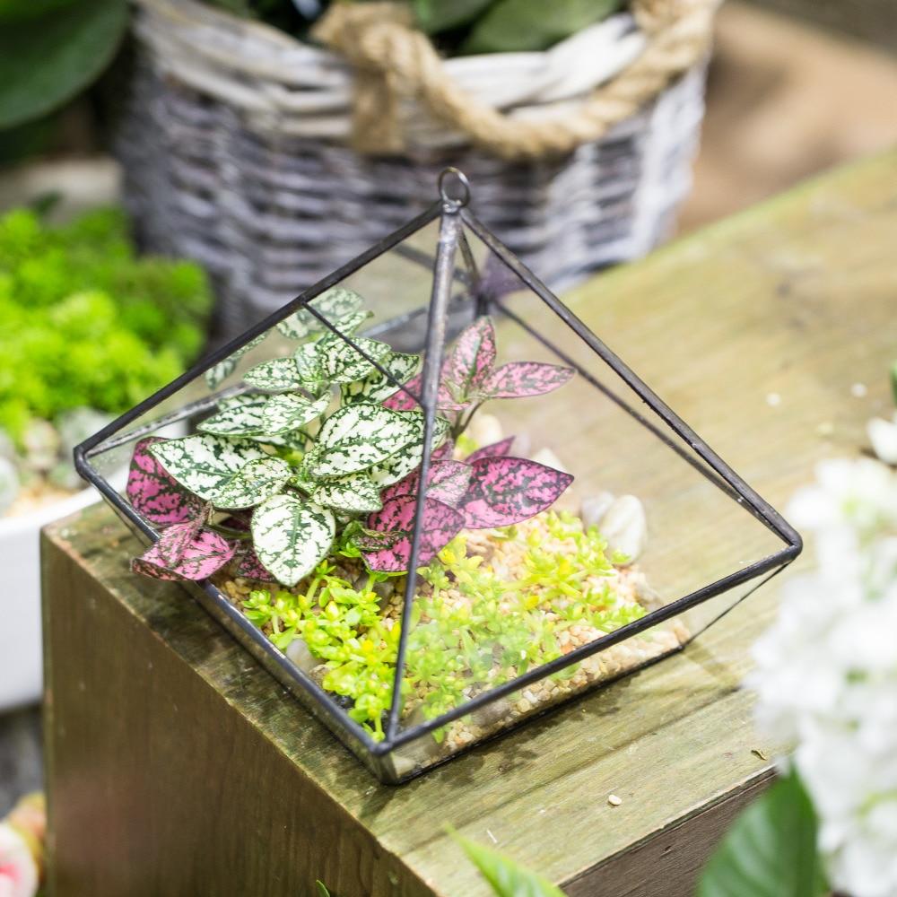 Bağlı tablet Asma Vertebral Suculentent Fern Moss çiçəyi - Ev dekoru - Fotoqrafiya 5