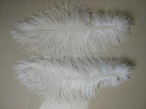 Image 3 - 50 pc qualidade penas de avestruz branco, 16 18 polegadas/40 45 cm, DIY decorações de casamento