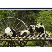 Lindo Panda telón de fondo Vintage madera árbol selva árboles verde hojas Grunge agua rueda viaje naturaleza primavera